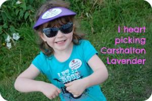 Carshalton Lavender 2012