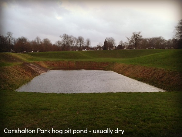 Carshalton Park flooded hog pit pond